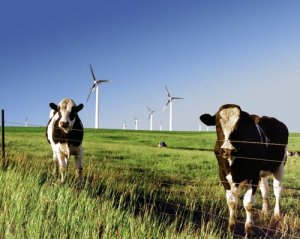This wind farm isn't in Virginia, and APCo's proposal doesn't include building any new wind. But the cows are cute. Photo credit: NREL