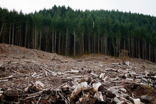 Trees clearcut.